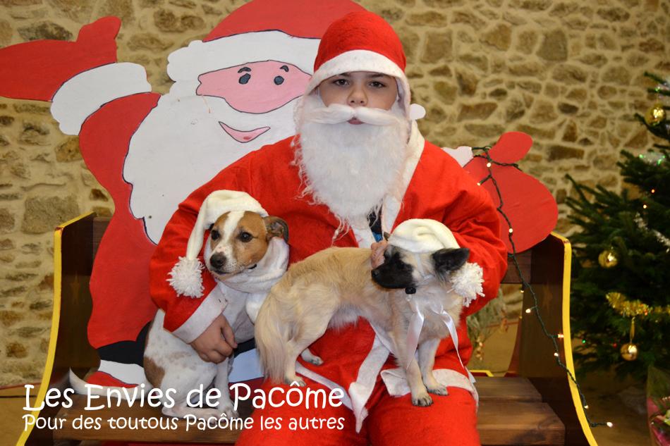 Ely le jack russell et Pacôme le chihuahua posent avec le Père Noël !